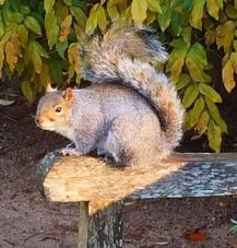 1squirrel
